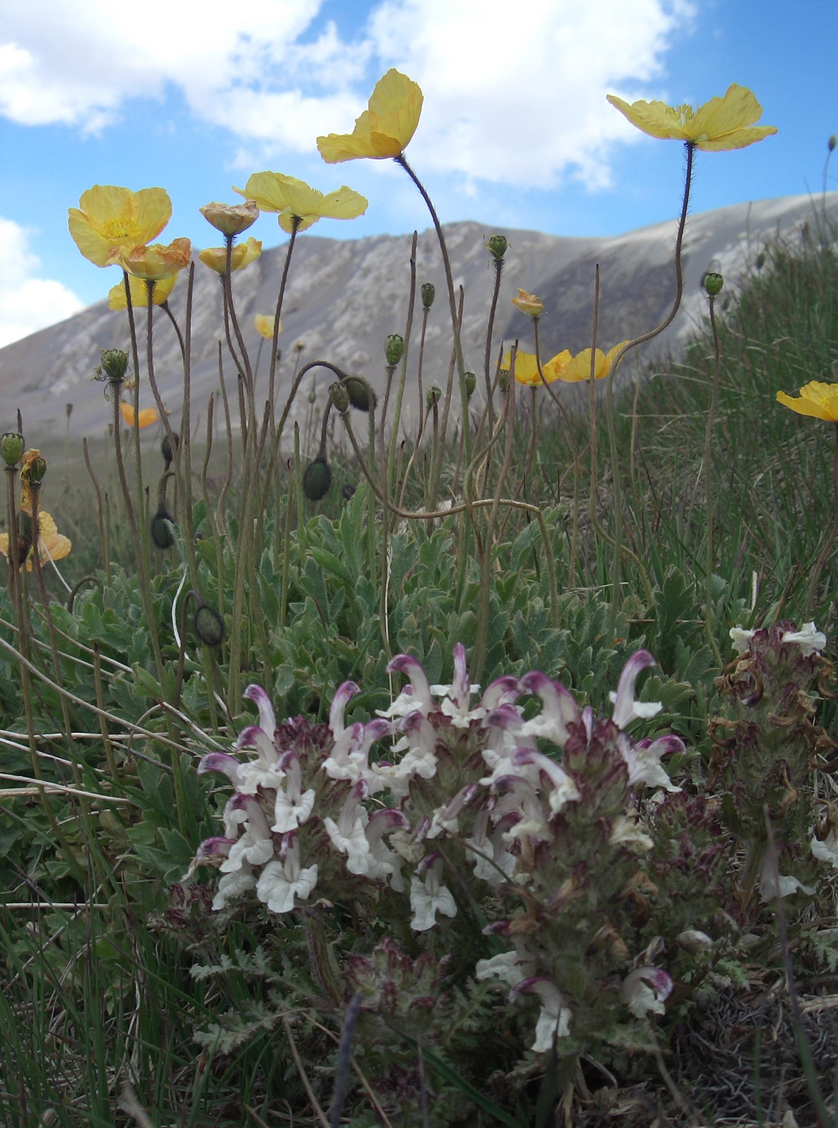 La flore de la réserve