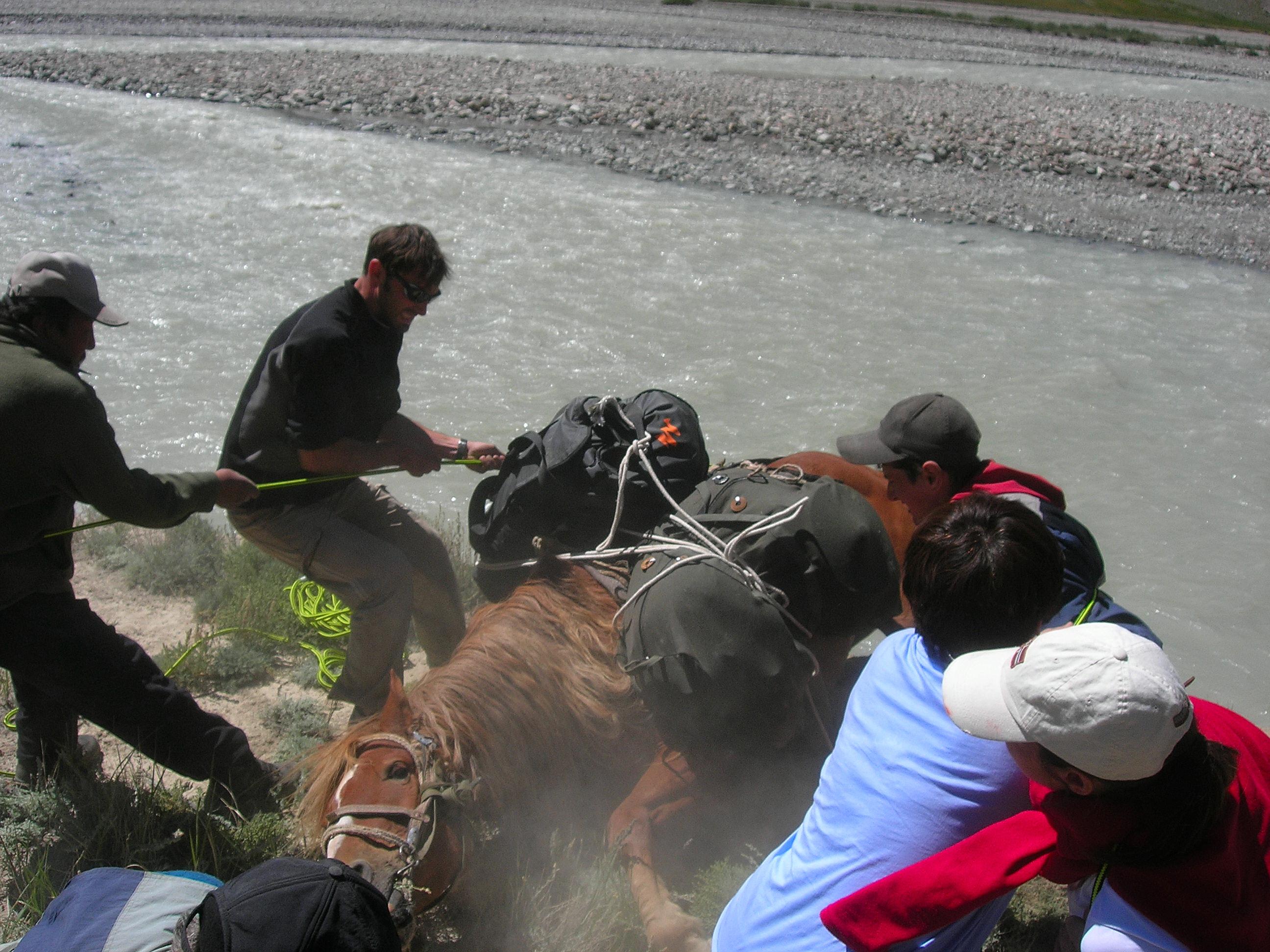 Sauvetage de notre cheval