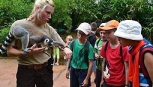 Atelier découverte auprès des lémuriens au parc zoologique de La Flèche