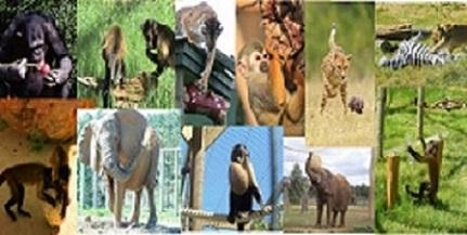 Divers enrichissements stimulants différentes espèces maintenues en captivité et leur permettant d'exprimer des comportements correspondant à leur éthogramme
